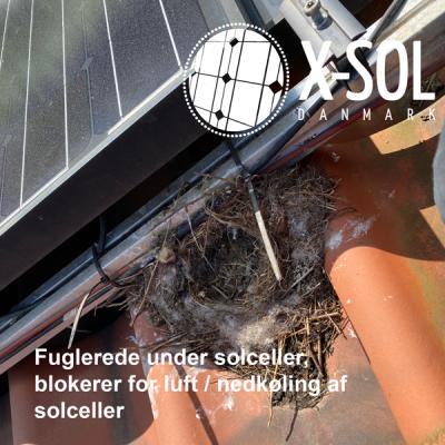 Solceller kan få skader fra fugle